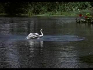 jorge Rivero (auch bekannt als George Flüsse) als adam -Schwimmbad