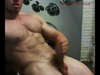 kanadische Muskel Gestüt