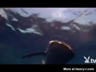 Nackte Mädchen in einem Hai-Käfig